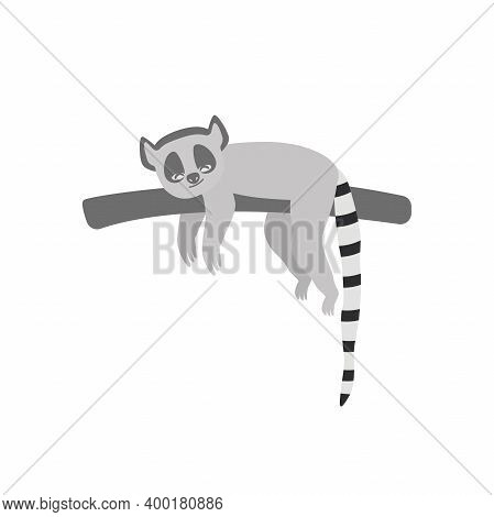 Ring-tailed Lemur. Isolated Wild Ape With Long Striped Tail. Cute Primate Mammal Cartoon Character I