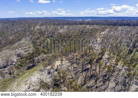 Aerial View Of Forest Regeneration After Bushfires In A Large Valley In The Central Tablelands In Re