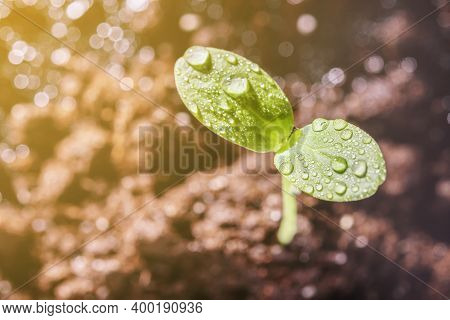 A Young Sprout With Dewdrops At Sunrise With A Copy Space.