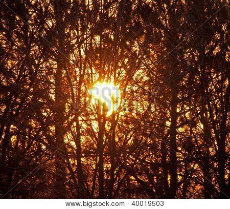 Glowing orange sun behind trees