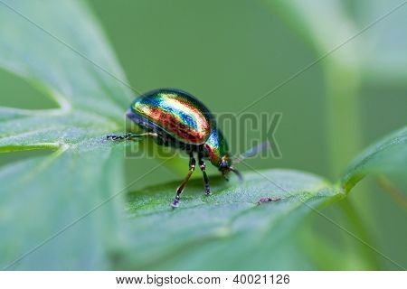 the multi-colored bug creeps on a grass poster