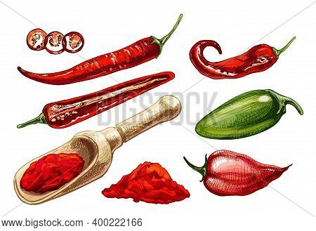 Chilli, Jalapeno, Habanero Whole, Half, Slice And Crushed Pieces In Wood Scoop. Vector Vintage Hatch