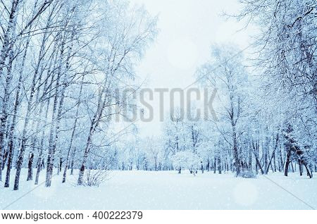 Winter forest landscape, cloudy winter wonderland forest with snowfall over winter forest park. Winter forest scene with falling snow, forest trees, winter forest landscape, forest background