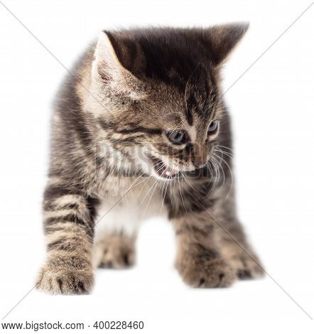 Kitten Meows Isolated On A White Background. Animal