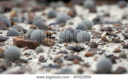 Pebbles of Champ Island, Franz Jozef Land - geological phenomenon - stone spheres (geodes)
