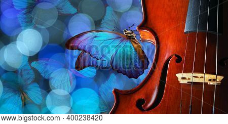 Violin On Blue Blurred Background Closeup. Beautiful Blue Butterfly Morpho On Violin. Music Concept.