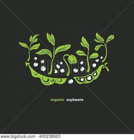 Soy Symbol. Vector Plant, Pod, Bean, Sprout, Leaves. Natural Vegan Design. Art Green Illustration. H