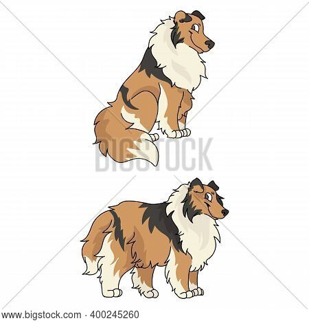Cute Cartoon Rough Collie Dog Vector Clipart. Pedigree Kennel Doggie Breed For Kennel Club. Purebred