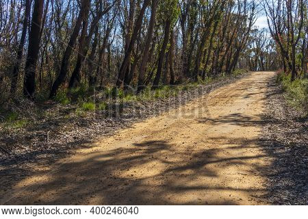 A Dirt Track Running Through Forest Regeneration After Severe Bushfires In The Blue Mountains In Reg