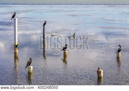 Water Birds Sitting On Old Jetty Posts In The Water Near The Long Jetty At The Entrance In Regional