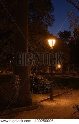 Lamp Lit In Park Illuminating A Tree. Nocturnal, Lonely, Vegetation, Stars