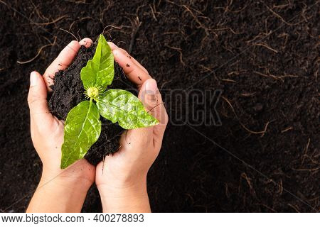 Hand Of Woman Holding Compost Fertile Black Soil With Nurturing Tree Growing Green Small Plant Life,