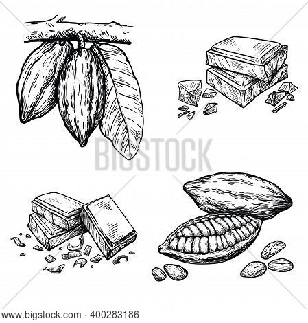 Cocoa Beans Illustration. Pieces Of Natural Dark Chocolate. Vector Illustration Isolated On White Ba