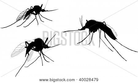 illustration with three mosquito silhouettes isolated on white