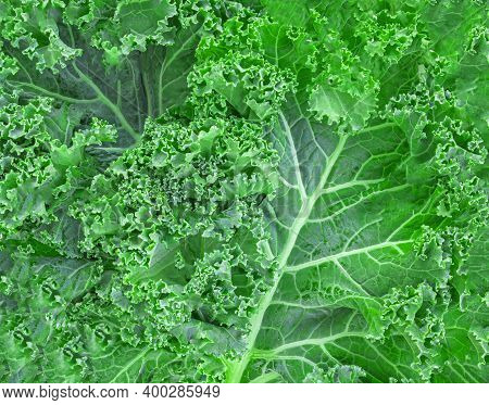 Kale Leaf Salad Vegetable Isolated On White Background. Greens Texture.  Food Concept.