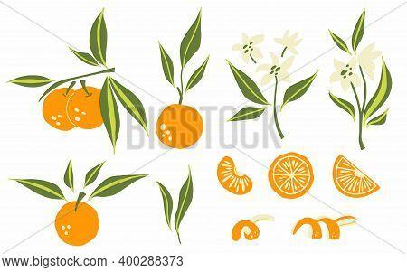 Oranges Set. Exotic Tropical Orange Citrus Fresh Fruit, Whole Juicy Tangerine With Green Leaves And