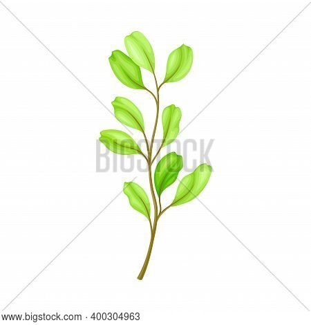 Green Grass Stalk As Wildflower Specie Or Herbaceous Flowering Plant Vector Illustration