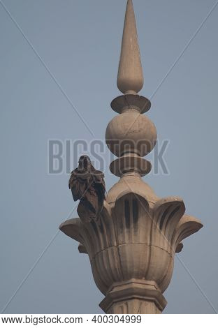 Black Kite Milvus Migrans Perched On A Minaret Of A Monument. Old Delhi. Delhi. India.