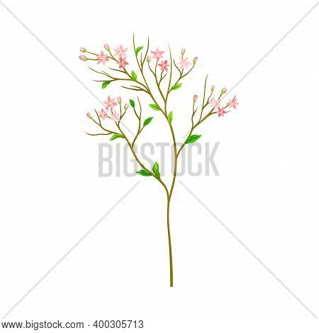 Meadow Flower With Small Florets As Wildflower Specie Vector Illustration