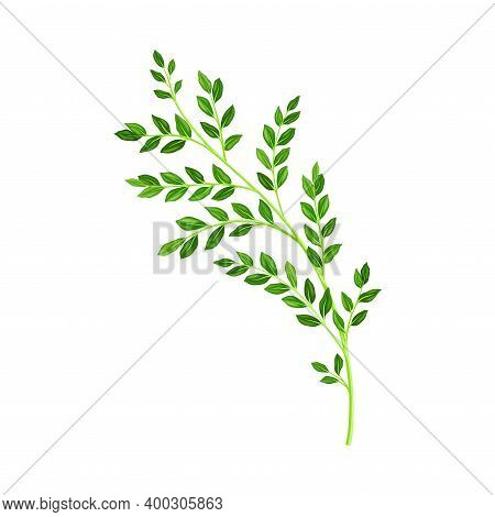 Grass Floral Branch As Wildflower Specie Or Herbaceous Flowering Plant Vector Illustration