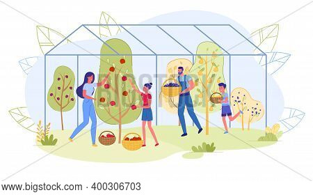 Seasonal Fruit Picking, Family Greenhouse Products. Parents And Children Have Grown Fruit On Trees.