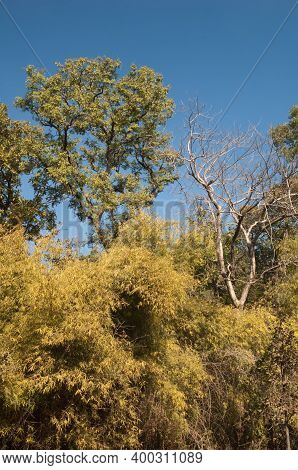 Forest In Bandhavgarh National Park. Madhya Pradesh. India.