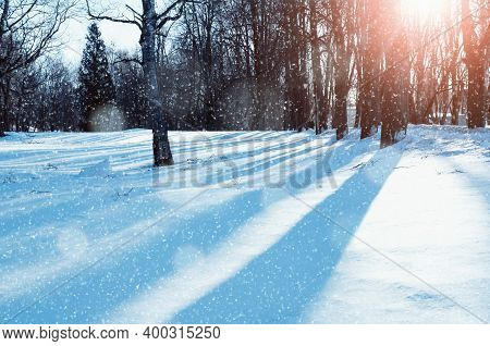 Winter landscape, sunny winter park under falling snow, winter forest nature with snowfall. Colorful winter city park, sunny winter morning, winter sunrise in the winter city park, winter landscape scene