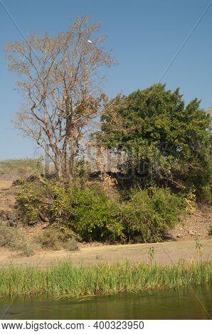 Riverside In The Hiran River At Sasan. Gir Sanctuary. Gujarat. India.