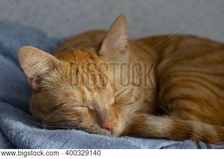 The Ginger Cat Sleeping In The Bed