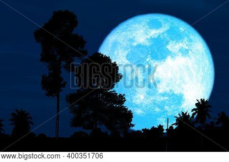 Super Harvest Blue Moon And Silhouette High Trees In The Night Sky