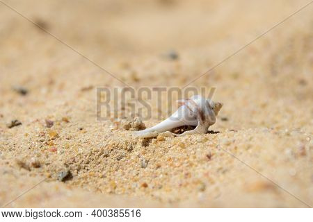 Hermit Crab Hiding In A Shell On A Sandy Beach.