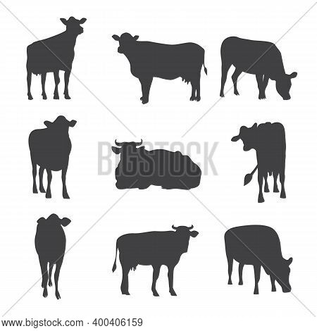 Set Of Cows Black Silhouettes In Different Poses Vector Illustration Isolated.