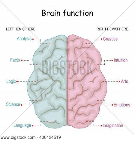 Brain Function. Left Analytical And Right Creative Of Cerebral Hemispheres. Creative Part And Logica