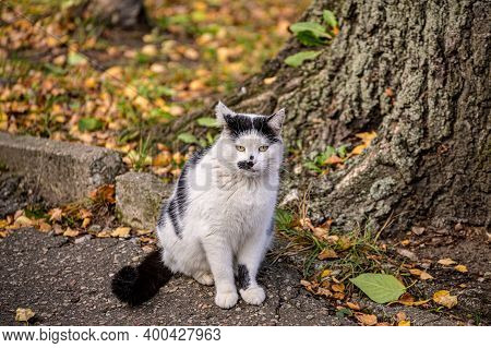 A Beautiful White Street Cat Looks Very Cute Against The Background Of Fallen Leaves.