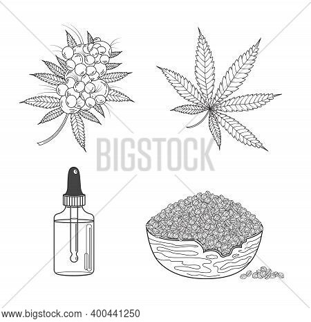 Marijuana Or Cannabis Set: Hemp Leaf, Seeds, Oil, Cones And Inflorescence. Vector Illustration In Ha