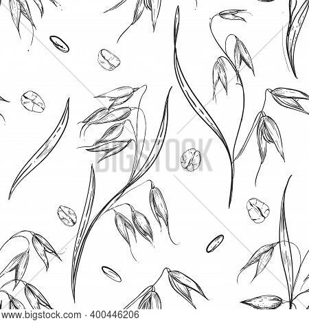 Detailed Hand Drawn Black And White Illustration Seamless Pattern Of Oat Ear, Wheat, Leaf, Grain, Ag