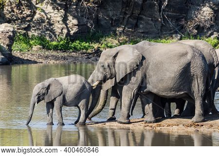 Cute Baby African Elephant Drinking At A Waterhole Drinking With Mother Close Behind Keeping Watch I
