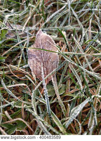 Frozen Leaf In Frozen Grass. Winter Floral.winter Morning