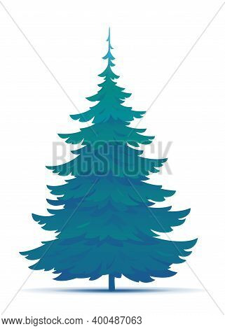 One Tall Spruce Tree Illustration, European Spruce Evergreen Coniferous Tree In Side View Isolated