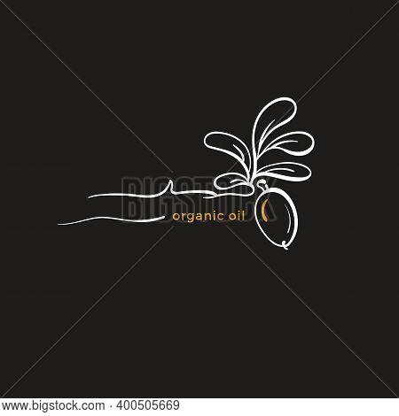 Argan Plant Logo. Vector Simple Bean, Art Line Leaf. Graphic Illustration, Botanical Symbol. Farm Or