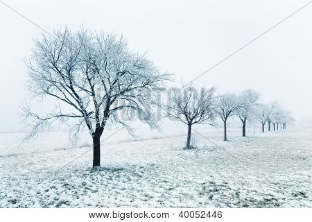 Misty orchard in winter