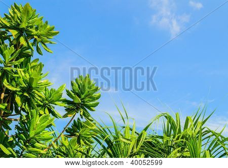 Green plant with blue sky