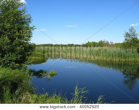 beautiful summer landscape with picturesque lake