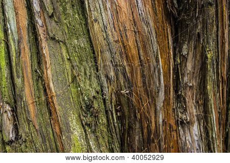 Closeup of a Tree Trunk