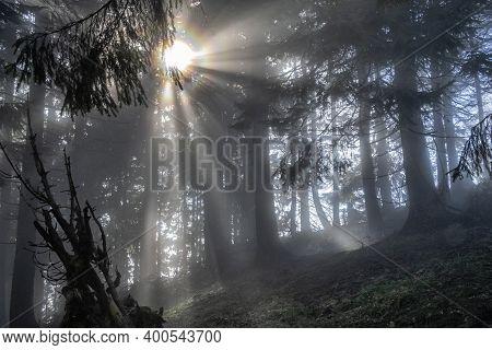 Sunrays In Coniferous Forest, Hnilicka Kycera, Little Fatra, Slovak Republic. Autumn Natural Scene.