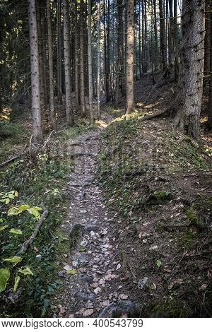 Footpath In Coniferous Forest, Little Fatra Mountains, Slovak Republic. Hiking Theme. Seasonal Natur