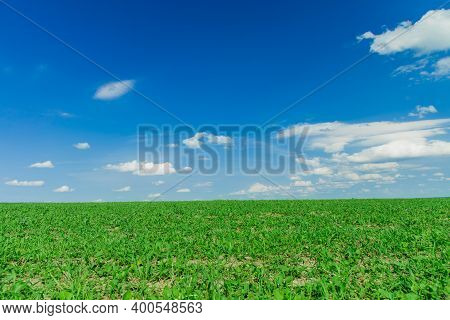 Idyllic Green Grass Agricultural Environment Space Horizon Nature Scenic View Background Empty Copy