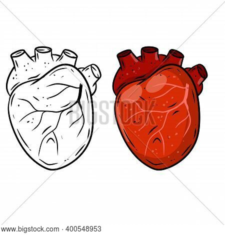 Heart. Human Internal Organ. Medicine And Cardiology. Element For Textbook And Medical Education. Ar
