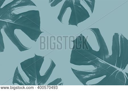 Monstera Leaf Pattern Makes A Natural Green Background With Plant Leaves In Abstract