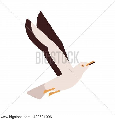 Beautiful Flying Seagull Vector Flat Illustration. Adorable Nautical Marine Bird, Arctic Inhabitant